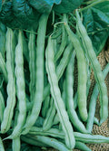 Kentucky Wonder Pole Beans
