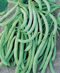 Tendergreen Improved Beans