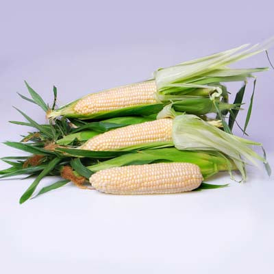 Eden White Sweet Corn