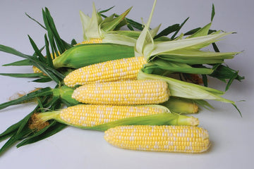 Nirvana Bicolor Sweet Corn