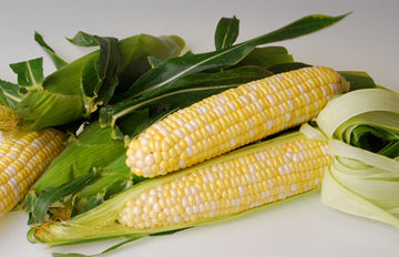 Sweetness Bicolor Sweet Corn