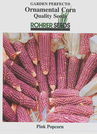 Early Pink Popcorn Ornamental Corn