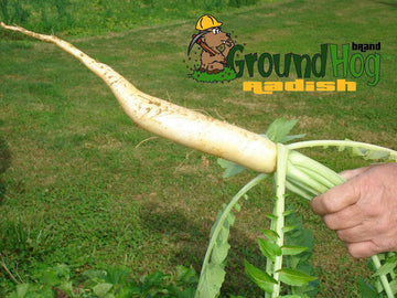 Garden Perfect Groundhog Radish