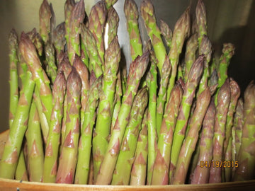 Jersey Knight Asparagus Roots