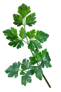 Italian Dark Green Plain Parsley