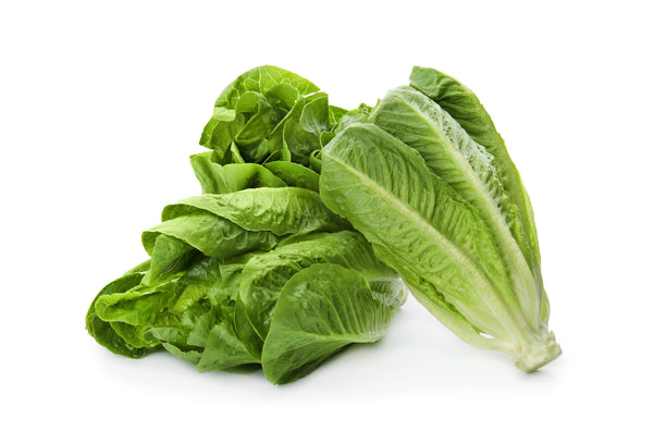 Paris Island Cos Romaine Lettuce