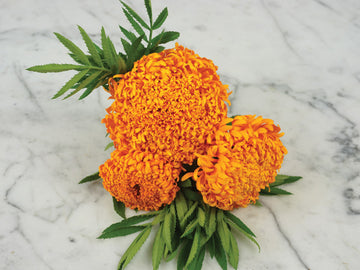 Spun Orange Marigold