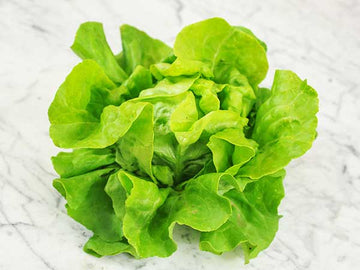 Big Boston Lettuce