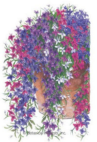 Trailing Cascade Of Color Lobelia