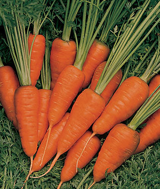 Short & Sweet Carrot