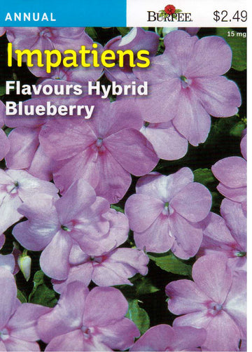 Flavours Hybrid Blueberry Impatiens