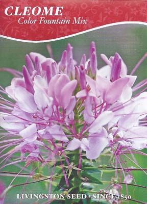 Cleome Fountain Mix (Pkt)