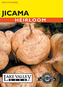 Jicama Heirloom (Pkt)