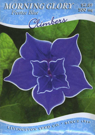 Picottee Blue Morning Glory