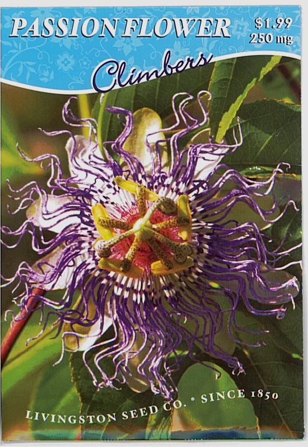 Passion Flower Caerulea
