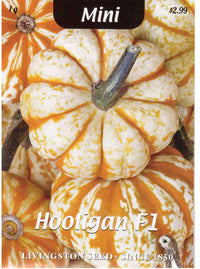 Hooligan F1 Pumpkin