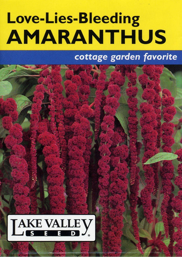 Amaranthus Love Lies Bleeding