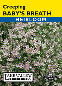 Creeping Baby's Breath