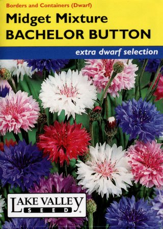 Midget Mix Bachelor Button