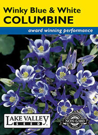 Winky Blue & White Columbine