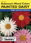 Robinson's Mixed Colors Painted Daisy