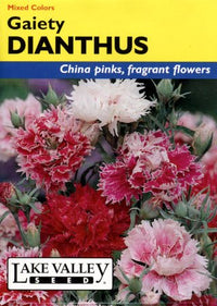 Gaiety Mix Dianthus