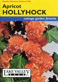 Apricot Double Flowered Hollyhock