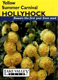 Yellow Summer Carnival Hollyhock