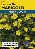 Lemon Gem Marigold