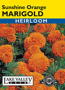 Sunshine Orange Marigold
