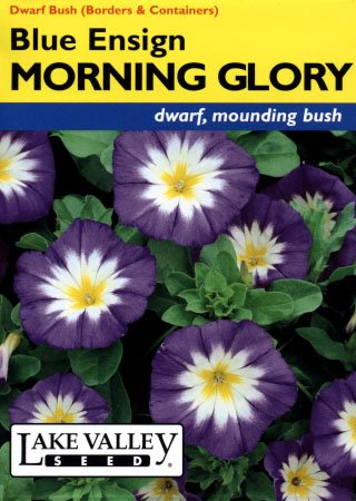 Dwarf Blue Ensign Morning Glory