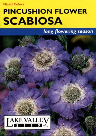 Scabiosa Pincushion Mixed Colors