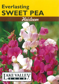Everlasting Sweet Pea, Perennial Mix