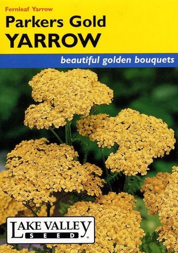 Parkers Gold Yarrow