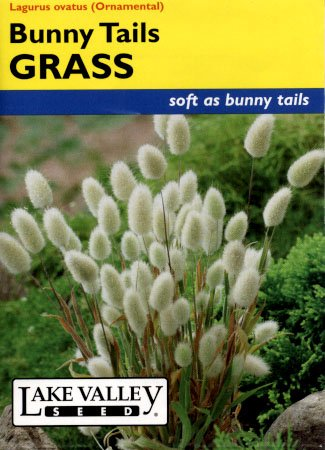 Bunny Tails Ornamental Grass