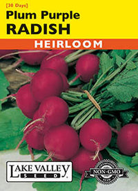 Plum Purple Radish