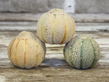 Golden Jenny Melon