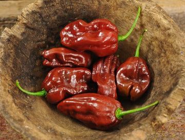 Chocolate Habenero Hot Pepper