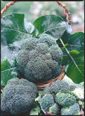 All Season Blend Broccoli