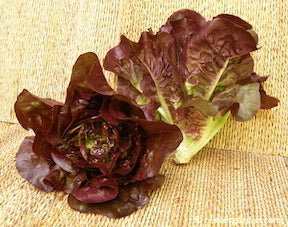 Ruby Gem Romaine Lettuce