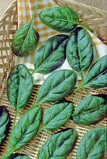 Catalina Baby Leaf Spinach