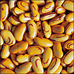 Tiger's Eye Bean