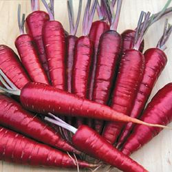 Purple Dragon Carrot