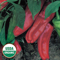 Marconi Red Sweet Pepper