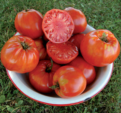 Tomato - Italian Heirloom