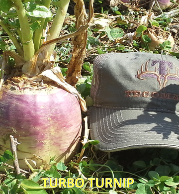 Tecomate Turbo Turnip