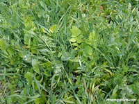 Scatter Can Cover Crop (Can)