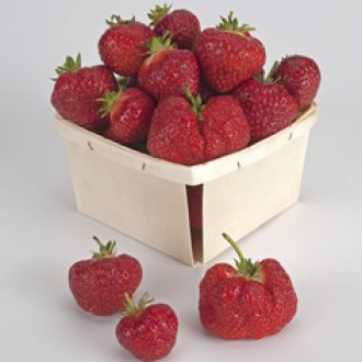 Annapolis Strawberry Plants (25/Pk)