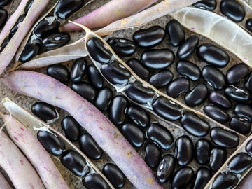 Black Turtle Bean (Pkt)