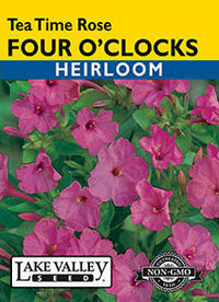 Four O'Clock Tea Time Rose Heirloom (Pkt)